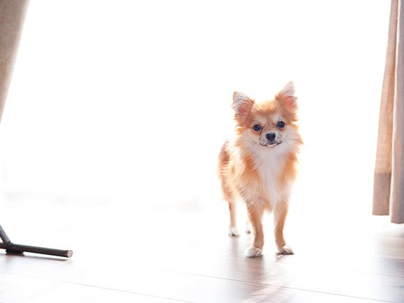 愛犬の「きなこ」。家の購入で叶った、新しい家族との生活。