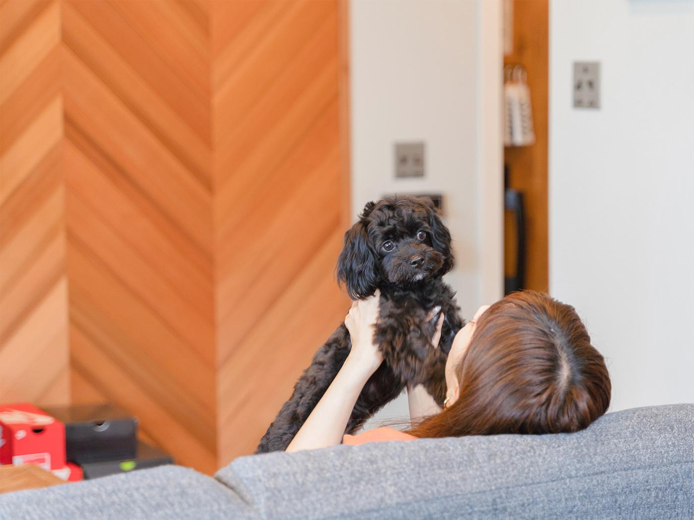 引越し当日に家族に加わったという愛犬のオレオくん。