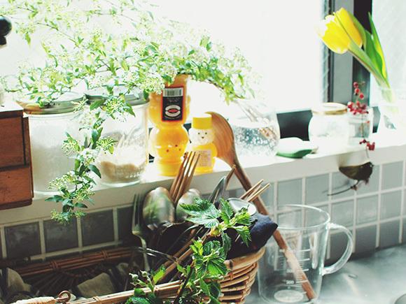 キッチンに飾られたコデマリ