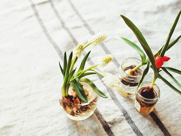 空き瓶を活用した春の球根栽培