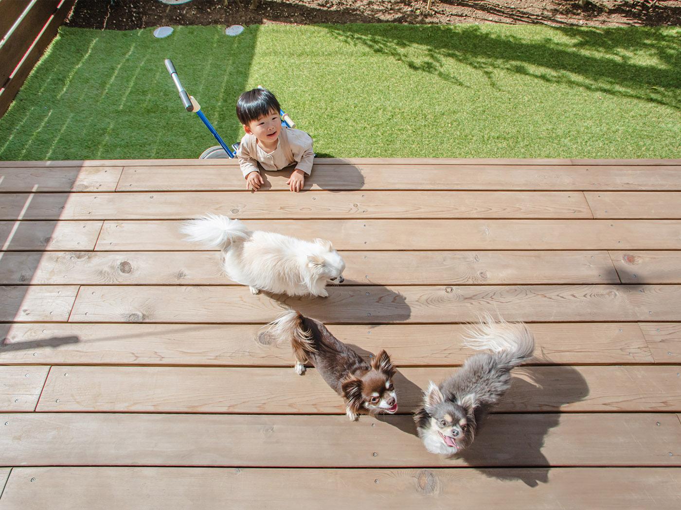 お子さんと愛犬たちは大の仲良し。左からラニ、キラ、リロ。