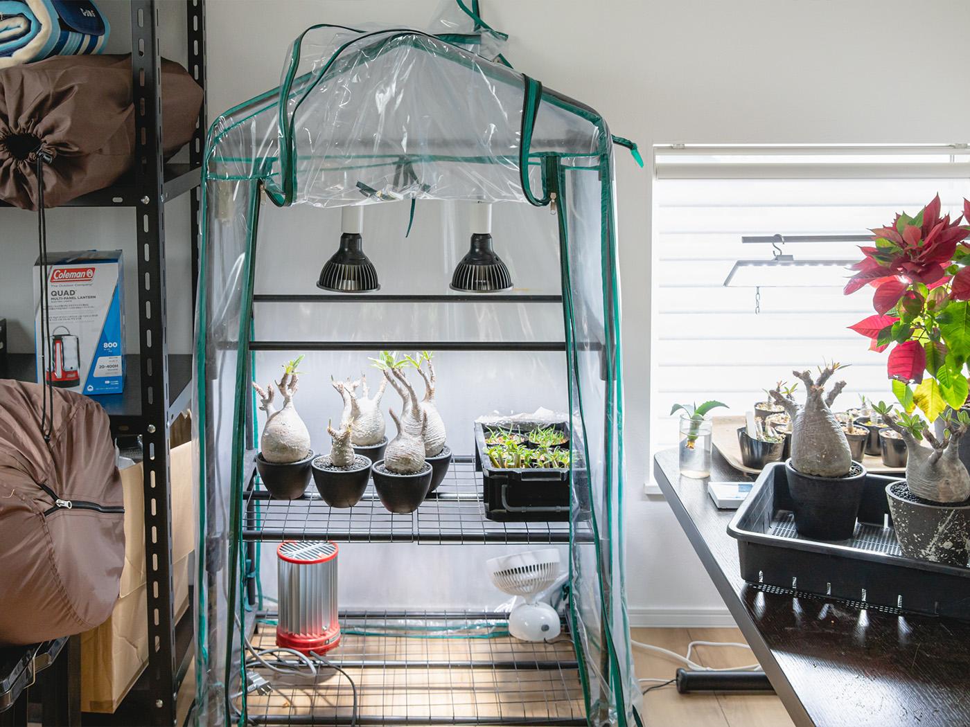 2階には小さなビニールハウスを設置した植物部屋が。