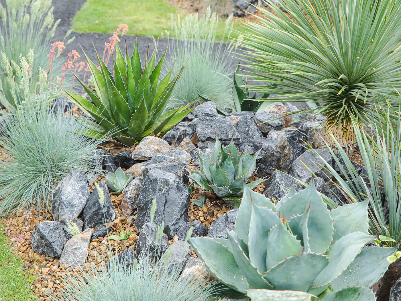 シダやアガベなどの植物がところ狭しと並びます。石は石材店で働くご友人から調達。