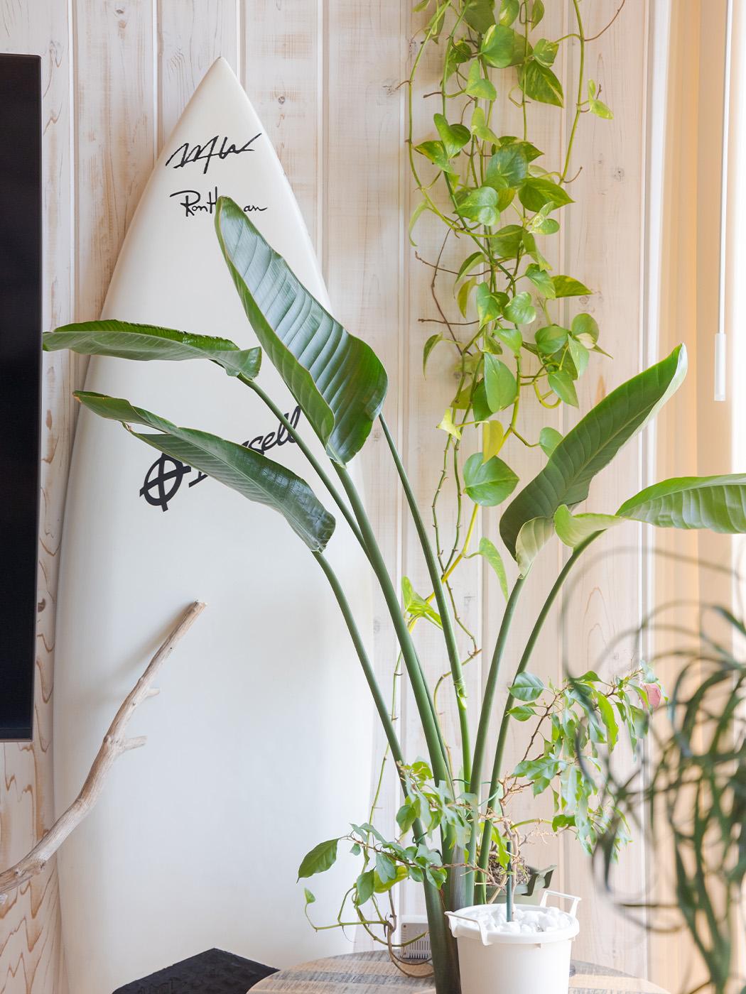 室内には観葉植物がたくさん。