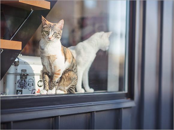 家を建てたら猫を2匹飼うと決めていたそう。名前は、ビーフとポーク。