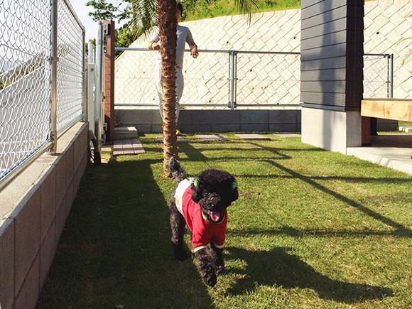 愛犬アッシュも広い庭に大喜び。