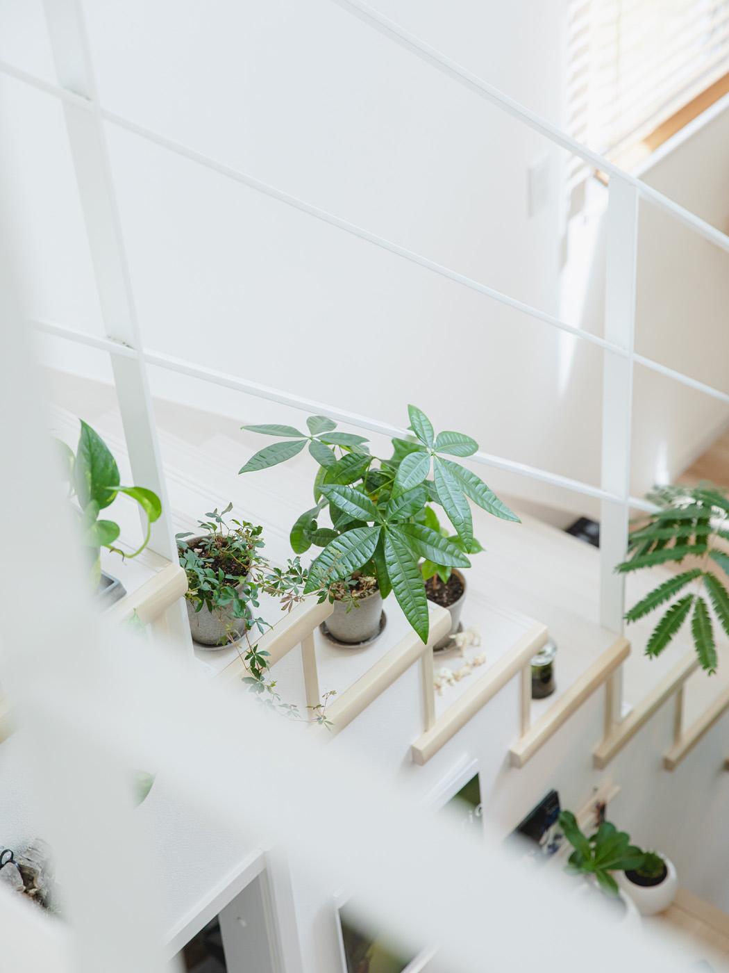 室内にも観葉植物が至る所に。