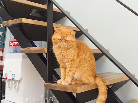 鉄骨階段もインテリアコーディネーターさんからの提案だったそう。